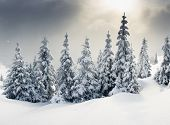stock photo of snow clouds  - Trees covered with hoarfrost and snow in mountains - JPG
