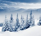 picture of winter landscape  - Beautiful winter landscape with snow covered trees - JPG