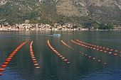 Longline Culture ( Rope Culture ) Mussel Farm.  Montenegro, Adriatic Sea, Bay Of Kotor, View Of Pera poster