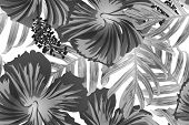 Black White Exotic Pattern. Monstera Leaves And Hibiscus Flowers In Summer Print.  Saturated Large F poster