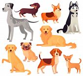 Dogs Pets Character. Labrador Dog, Golden Retriever And Husky. Cartoon Vector Isolated Illustration  poster