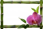 Постер, плакат: Бамбук рама и орхидей на белом фоне