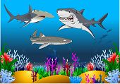 The White Shark, Hammerhead Shark And Tiger Shark Swim Around A Coral Reef poster