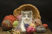 Baby Kitten Playing With Ball Yarn poster