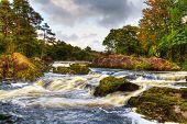 stock photo of irish moss  - Autumn mountain stream in Killarney National Park - JPG