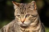 Close-up Portrait Of Domestic Cat Over Natural Background poster