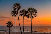 California Beach. Palm Trees At Sunset On Manhattan Beach, Los Angeles, California. Vintage Processe poster