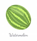 Watermelon Or Citron Melon Berry, Ripe Tropical Or Subtropical Plant Vector Illustration Icon Isolat poster