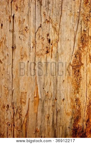 Tree Stripped Of Bark Background