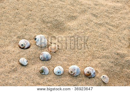 Summer Composition - Sea Shells With Sand As Background, Selective Focus