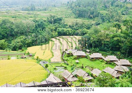 Even Built Irrigated Rice Fields And Resort