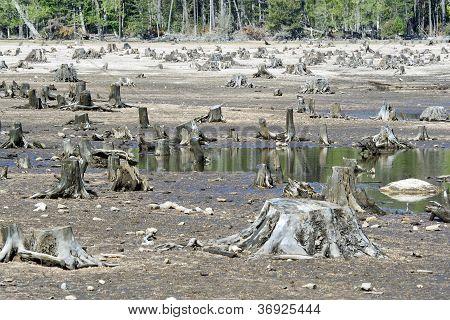 Destructed Forest