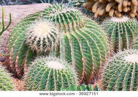 Many Kinds Of Cactuses