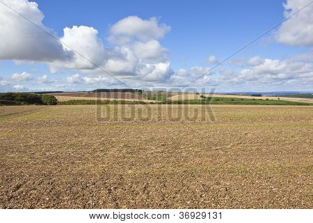 Chalky Agricultural Landscape