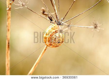snail in a branch