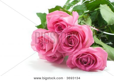 Five Pink Roses 1