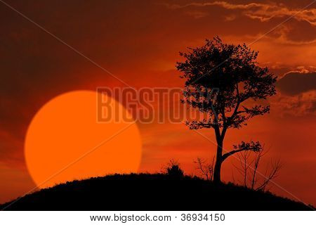 Sunset And Tree Background