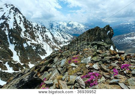 Alp Flowers  Over Mountain Precipice And Clouds