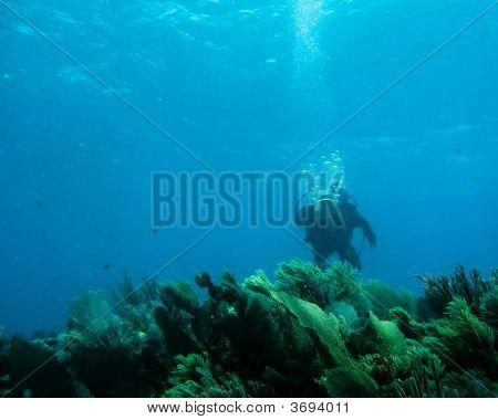 Unterwasser Riff und Sea life