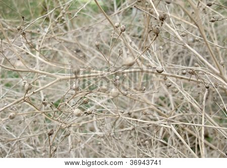 Sere Plant Detail