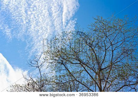 Spring Tree Leaves Against Blue Sky