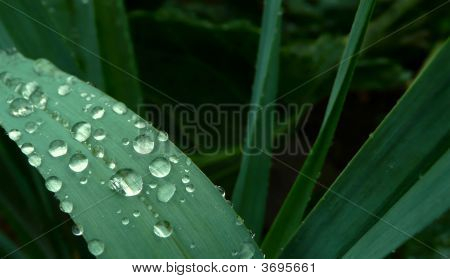 Water Droplets Grass Blade