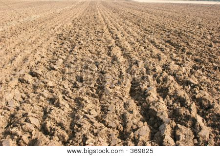 A Straight Furrow