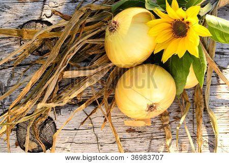 Onion...