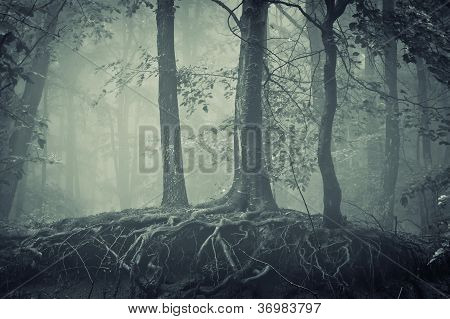 scary trees with roots in a dark forest