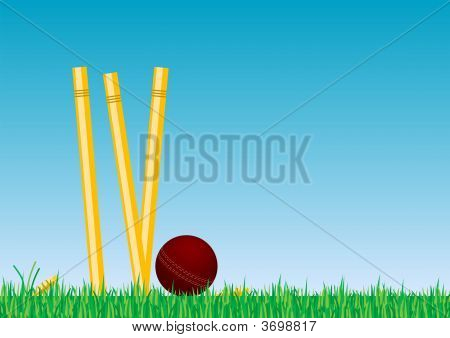 Cricket Ball In The Grass 2B