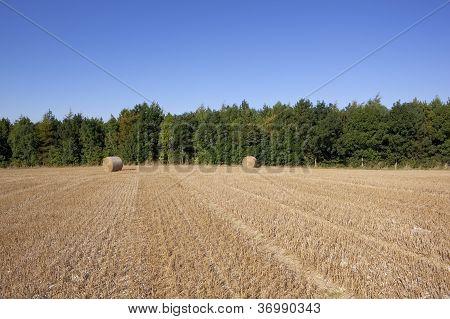landschaftlichen Hintergrund