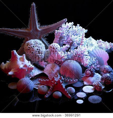 Sea Life Arrangement