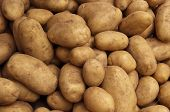 stock photo of carbohydrate  - Crop of Fresh Farm Potatoes Texture Background - JPG