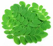 image of oleifera  - Close up of edible moringa leaves over white background - JPG