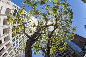 picture of lax  - perspective of skyscraper with green tree under blue sky - JPG