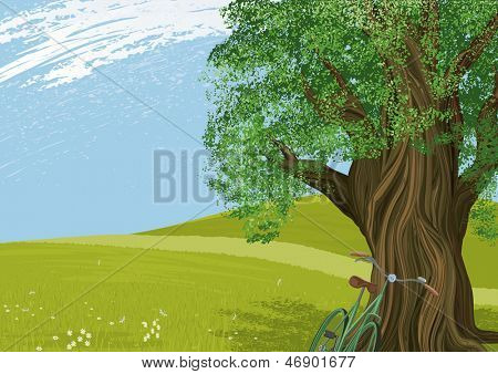 Vector Illustration of an old tree in a meadow. All objects are separated to layers.