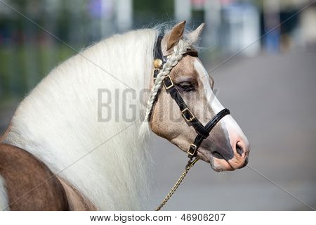 Horse head with beautiful long mane.