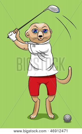Surikata - The Golfer
