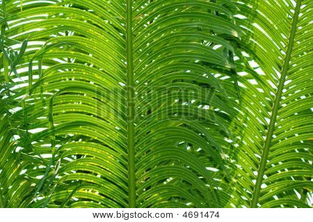 Palm Tree Background Texture