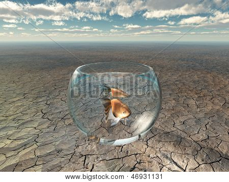 Gold fish in glass bowl in barren desert