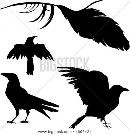 Crow-raven-bird