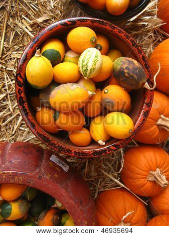 bunch of gourds in clay pots