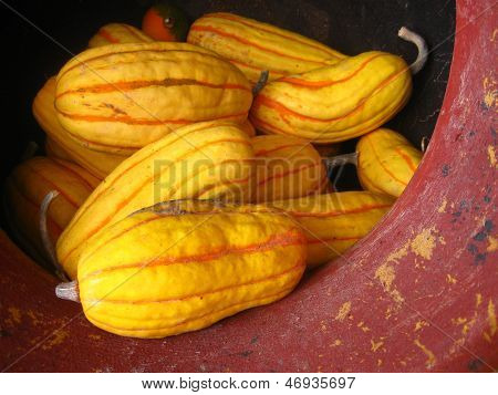 yellow gourds in a clay pot