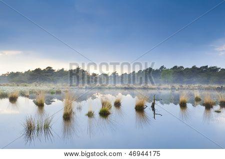 Fog Over Swamp In Drenthe