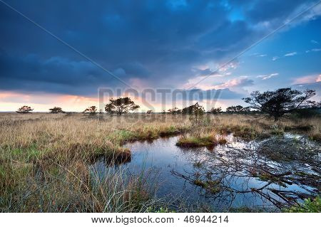 Sunset After Rain Over Swamps