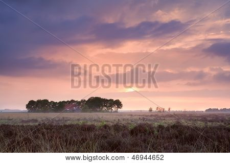 Calm Pink Sunset Over Home Among Swamps