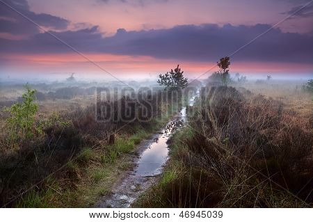 Wet Narrow Path In Fog