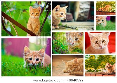 Peaceful Orange Red Tabby Male Kitten. Set Collage.old House On The Countryside
