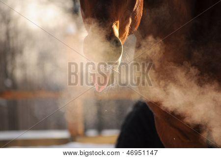 Lengua de caballo