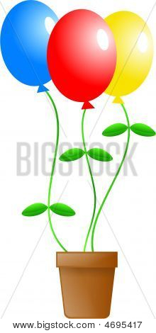 Balloon Plant